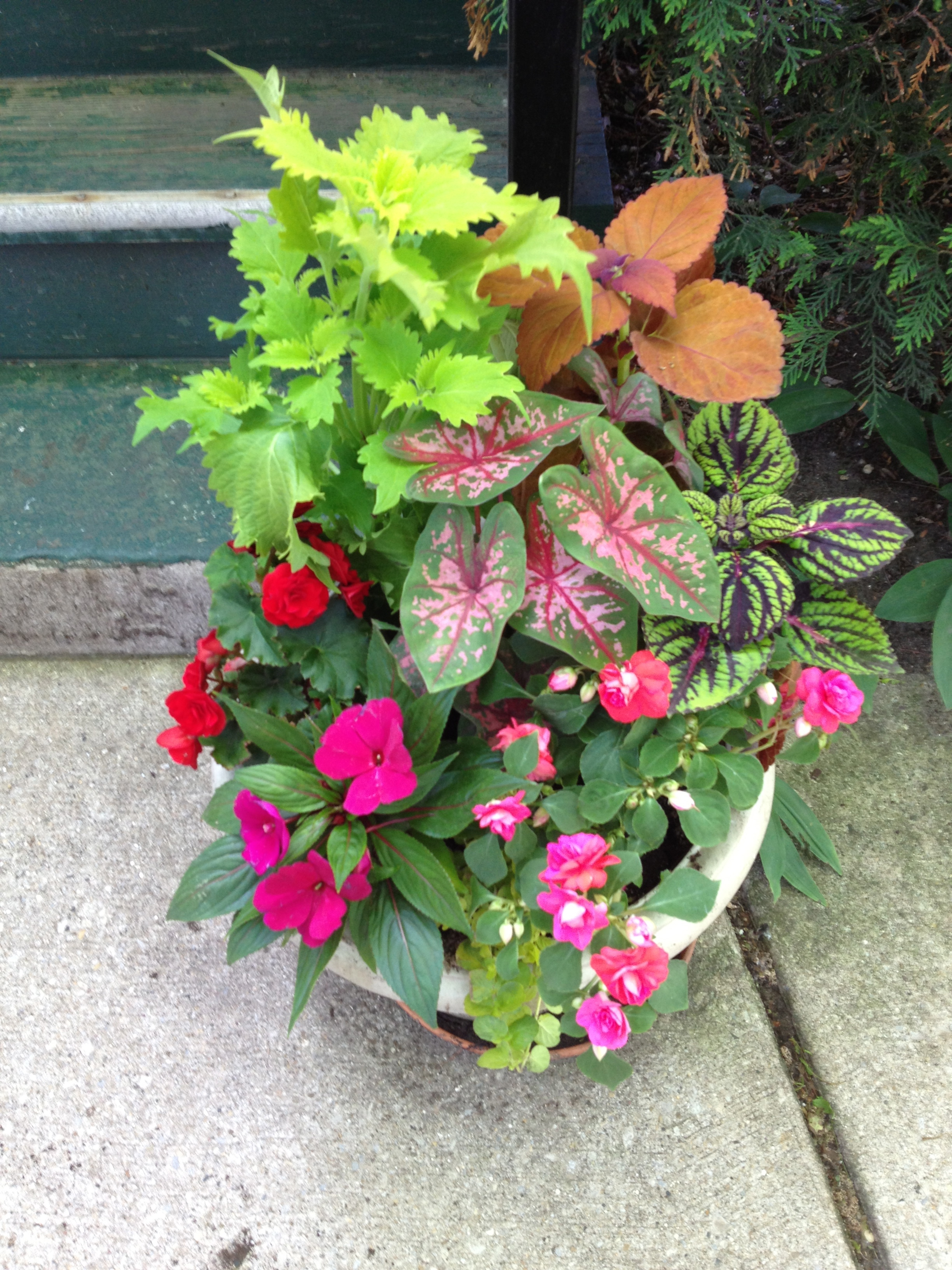 Annuals for the shade merello sons landscaping deep shade is a big challenge for annual container plantings the usual suspects are new guinea impatiens begonias fuchsia and coleus izmirmasajfo